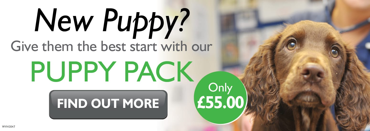 Puppy Pack covering puppy injections, flea & worm treatment, and much more for only £55 at vets in Newcastle-under-Lyme