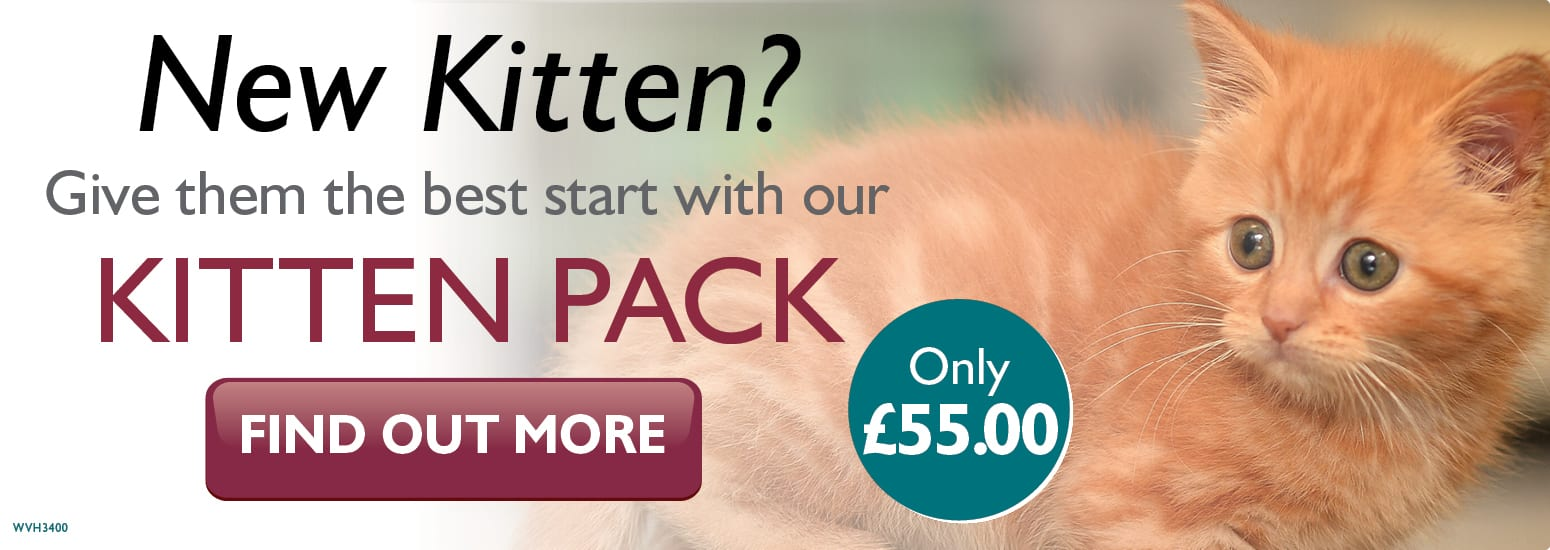 Kitten pack for just £55